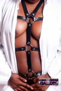 harness_7